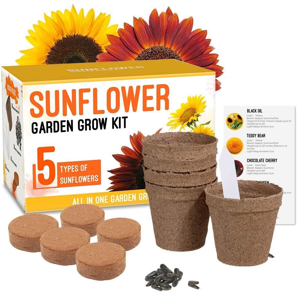 Sunflower Grow Kit