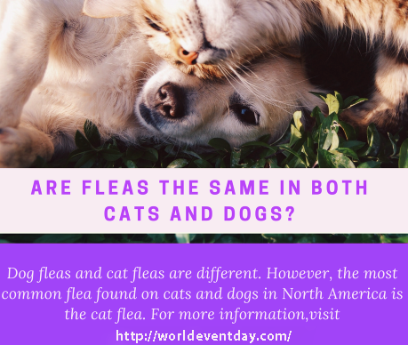 cat flea vs dog flea