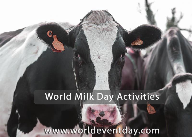 world milk day activities